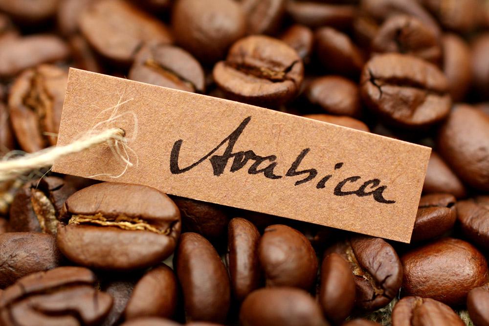 kopi-arabika
